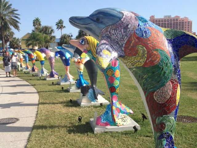 Clearwater Dolphins Trail | Visit St Petersburg Clearwater Florida