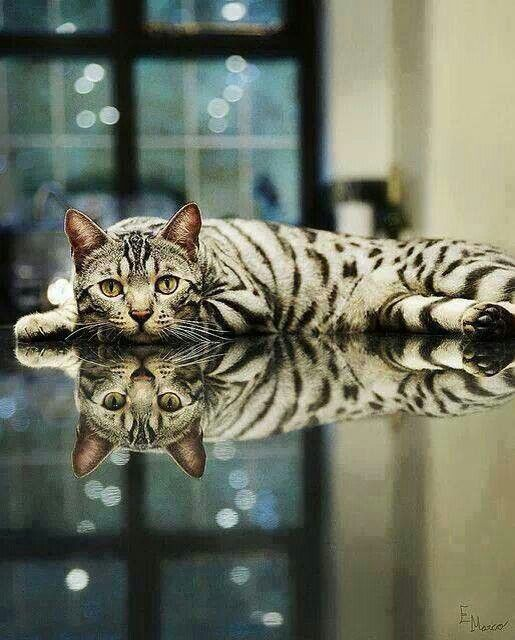 Fantastic use of reflection not only of the cat, but the window, the lights outside. bywstudent