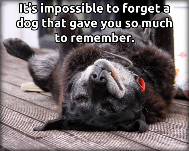 368 best images about DOG HEAVEN AND PET LOSS on Pinterest ...