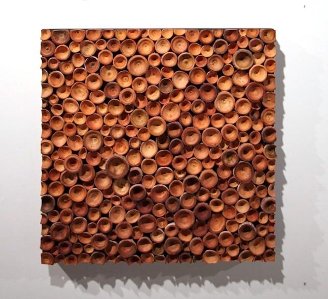 MALLEE  An assemblage of gum operculums.  Eucalyptus pyriformis - rosea