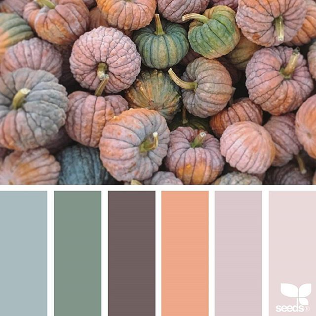 today's inspiration image for { color thanks } is by @suertj ... thank you, Sue, for another fantastic #SeedsColor image share + Happy Thanksgiving!