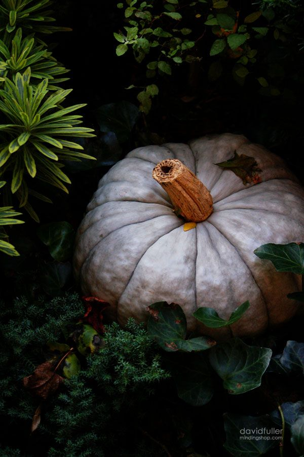 *: Photos, Grrrrreat Pumpkin, Fuller Photo, David Fuller, Pumpkin Seasons, White Pumpkins, Grey Pumpkin, Inspiration Lane, Aesthetics Plea