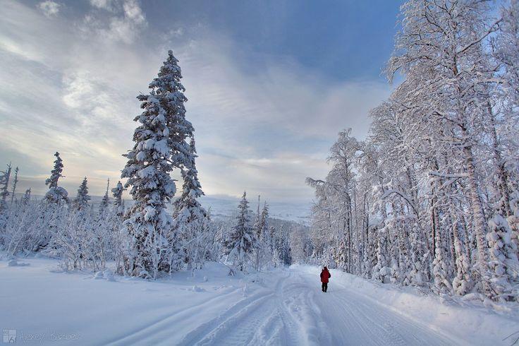 Зимняя сказка. 8. 01. 2016. -35. фото:А.Базуев
