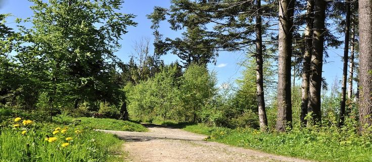 Phantasiereise Waldspaziergang zur Entspannung. Kostenloser Text steht zum download bereit. Die Phantasiereise kann auch therapeutisch genutzt werden.