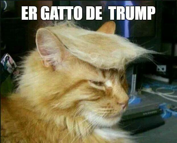 Trump's Cat