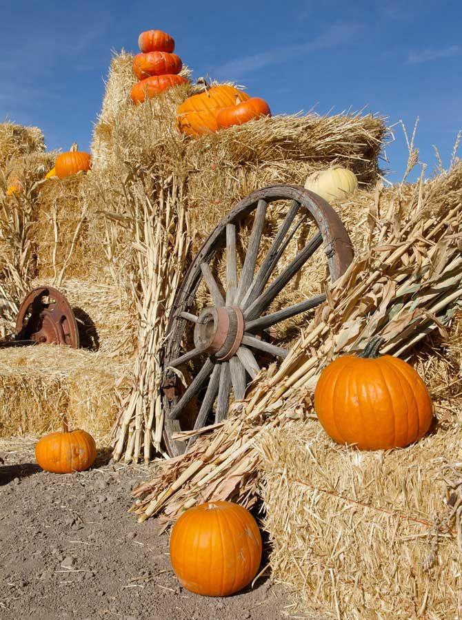 7815 Autumn Pumpkin Patch