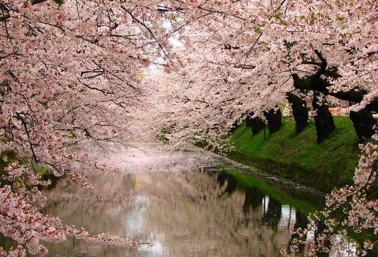 """""""Quiero hacer contigo lo que la primavera hace con los cerezos"""". (Neruda) Have a great weekend! pic.twitter.com/A9dJFIajvF"""