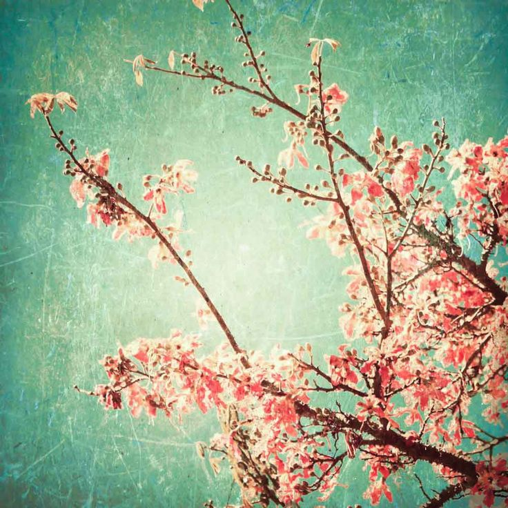 Vlies fotobehang Cherry blossom vintage - Bloemen behang   Muurmode.nl