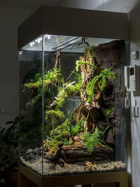 Reptile Terrarium not big enough for a beardie but beautiful none the less. - Best 25+ Reptile Terrarium Ideas On Pinterest Snake Terrarium