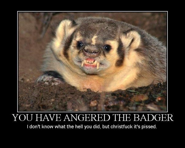 Angry badger! Made me giggle all day today