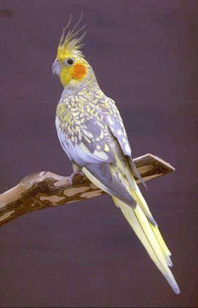 Super dlhé vtáky