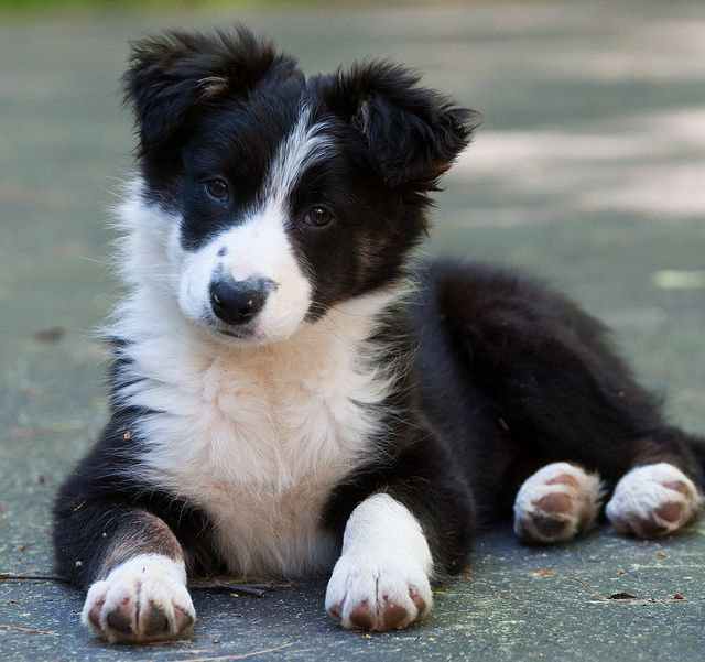 I have a border collie pup named Tempe (after Temperance Brennan from Bones)! She kind of resembles this dog:)
