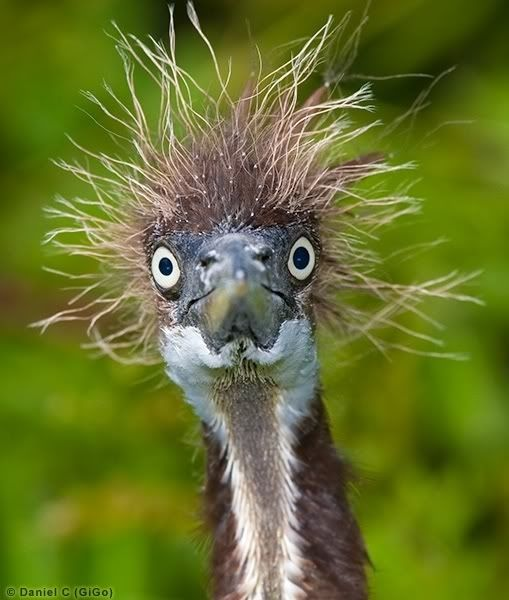This creature with a straw head. | 18 Cute Animals Having A Worse Hair Day Than You