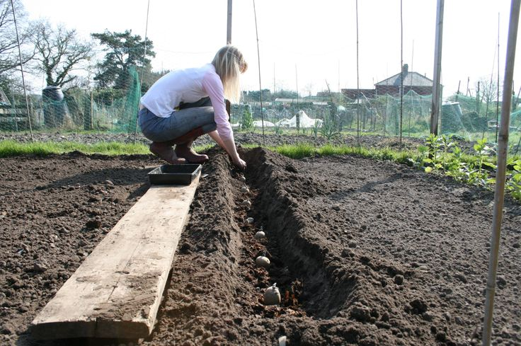 226 best images about cultiver bouturer multiplier semer on pinterest gardens planters and - Periode plantation pomme de terre ...