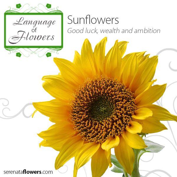 30 best language of flowers images on pinterest language of flowers meaning of flowers and. Black Bedroom Furniture Sets. Home Design Ideas