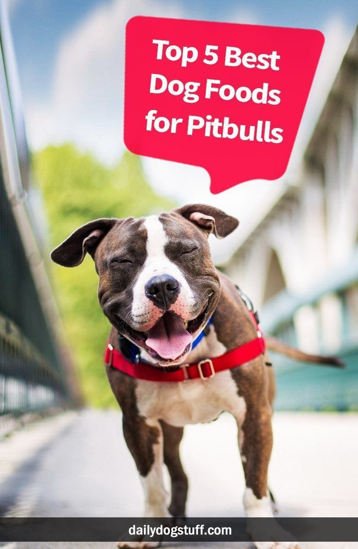 Top 5 Best Dog Foods For Pitbulls Pitbulls Have Evolved Drastically Throughout History The One Thing That Hasn T Ch In 2020 Best Dog Food Dog Food Recipes Pitbulls