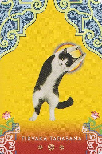 Cat Yoga: RESERVED | Flickr