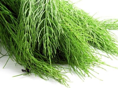 Horsetail Extract & Its Benefits & Side Effects | LIVESTRONG.COM