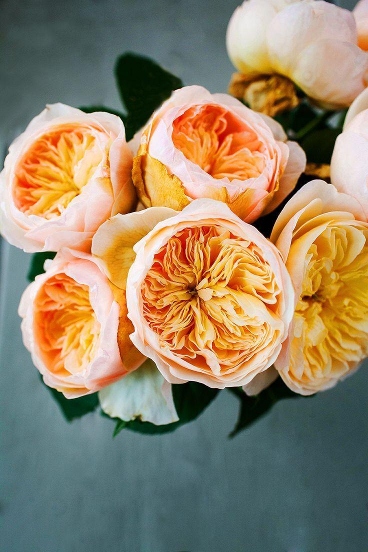peach garden roses.
