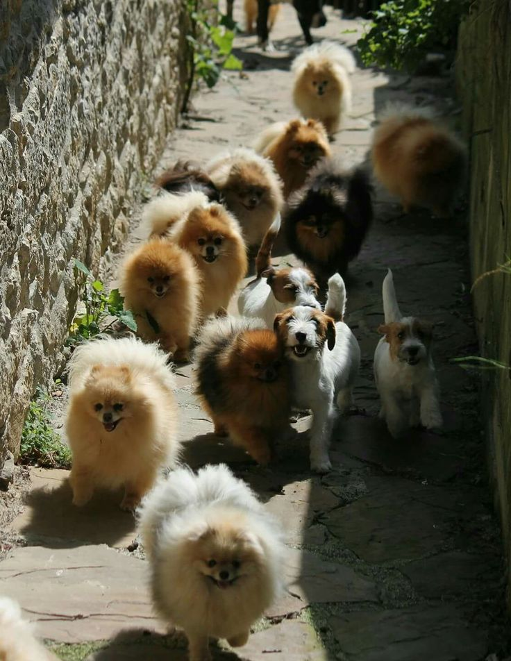 A stampede of cuteness is coming your way!