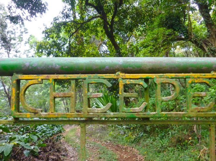 Jeep trail on coffee plantation in coorg