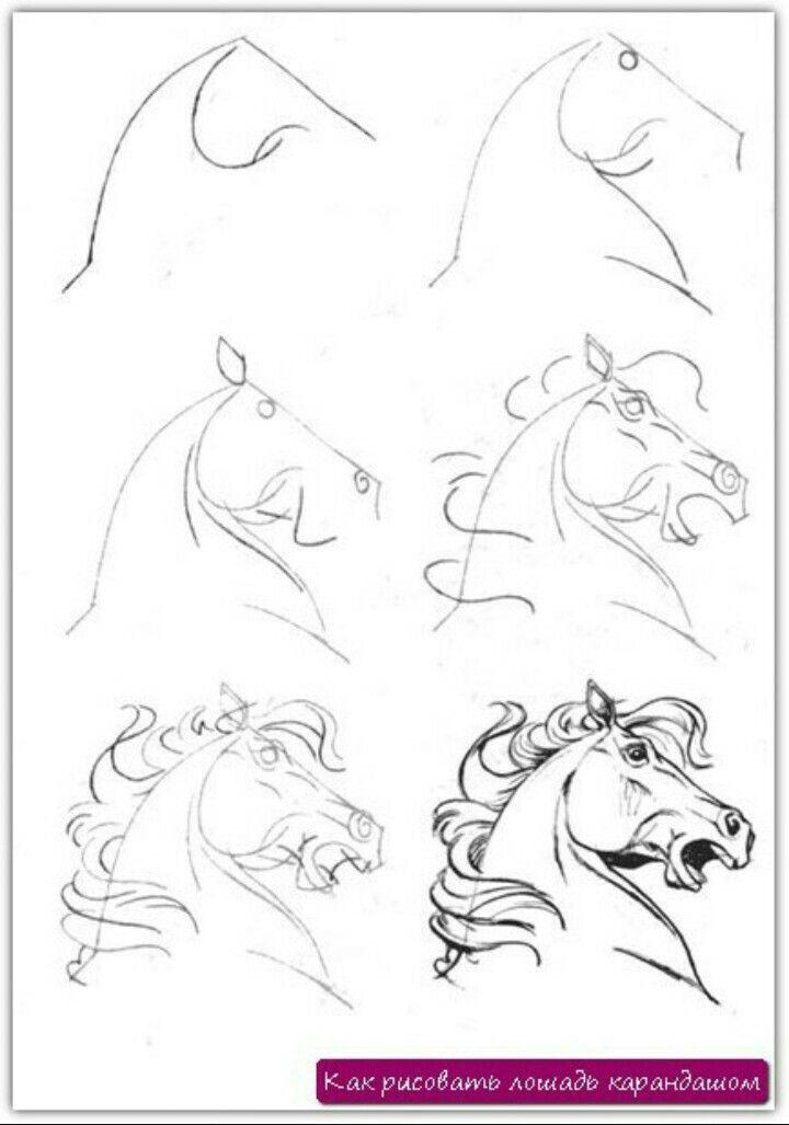 Картинки карандашом поэтапно красивые лошади