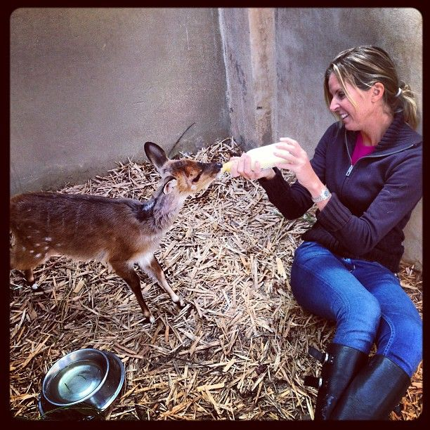 A bush buck under rehabilitation....