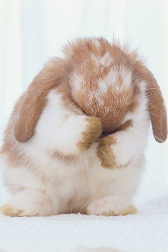 wwww! A baby rabbit covers its eyes with its paws. Too cute.