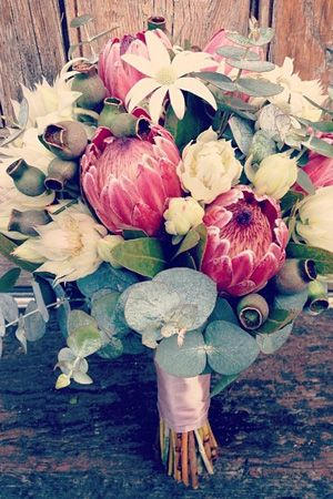 australian natives bouquet - flannel flowers, gumnuts, blue gum leaves - plus pink protea and Blushing Bride. brides of adelaide - #wedding #bouquet
