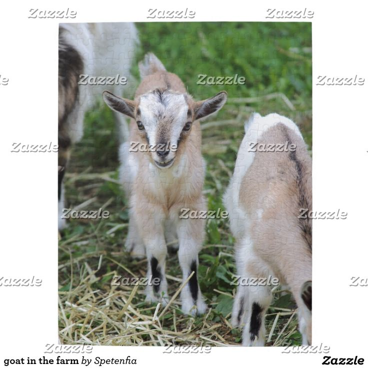 goat in the farm puzzle