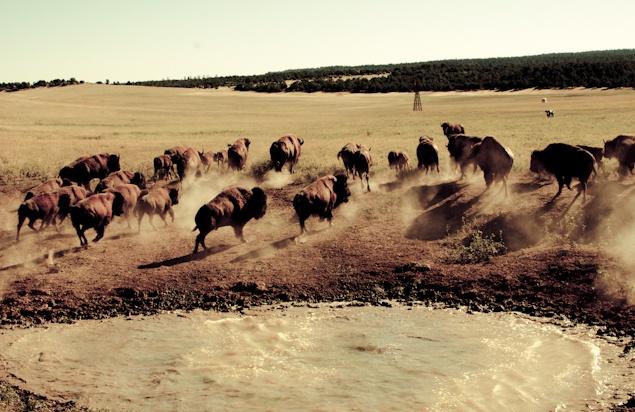 Zion Mountain Ranch - Nevada #JetsetterCurator