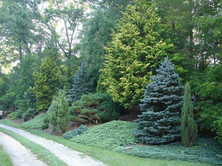 columnar trees zone 3 google search landscape ideas. Black Bedroom Furniture Sets. Home Design Ideas