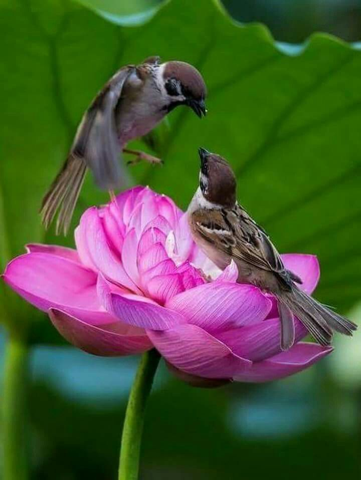 Открытки с добрым утром птичка