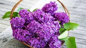 çiçek  sepet hd ile ilgili görsel sonucu