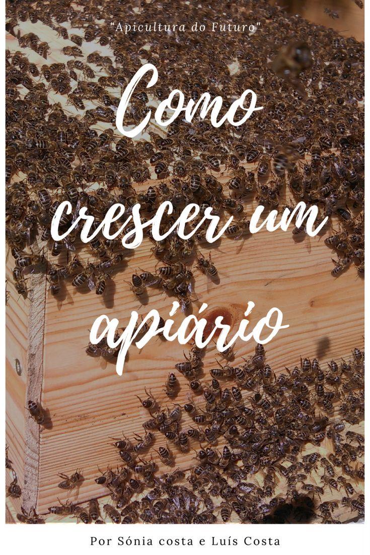 Um e-book que o ajudará a Crescer um Apiário fazendo apicultura natural.