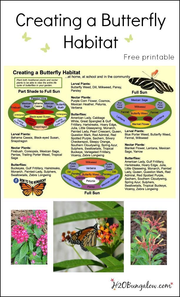 Creating a butterfly habitat free printable with DIY budget landscaping with lots of tips, resources and information H2OBungalow #butterflies #butterflygarden