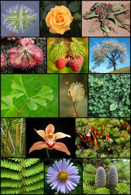 Fascinanta lume a plantelor: Plantele