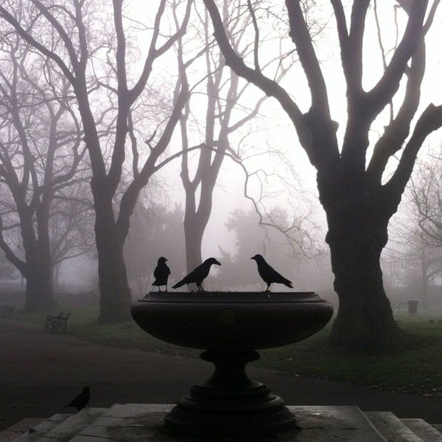 The Telegraph's online picture editor, David Sim, took this photo of crows perched on a fountain in a foggy Kennington Park this morning. Email your Spring weather photos to mypic@telegraph.co.uk and we'll include the best in a picture gallery.