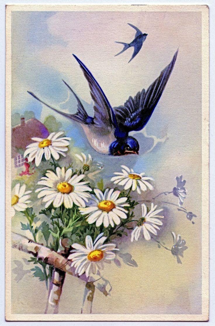 Victorian Bird with Daisies Clip Art | xxxooo