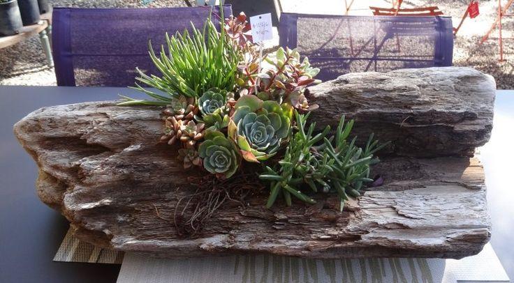 1000+ images about Mini-jardins en bois flotté on Pinterest ...