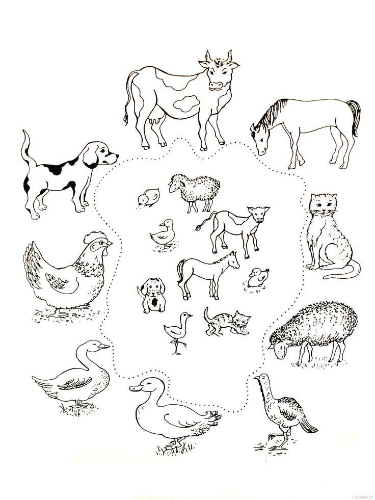 Zvířata a jejich mláďata | i-creative.cz - Kreativní online magazín a omalovánky k vytisknutí