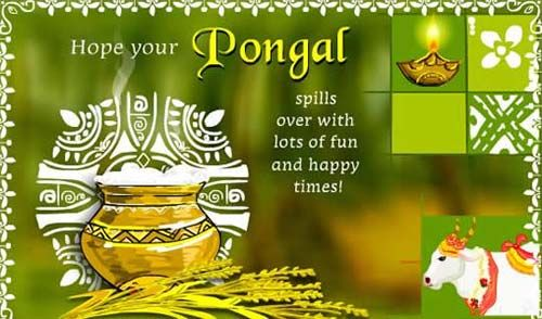Burns night 2016 in UK: pongal celebration customs and legends in the worl...