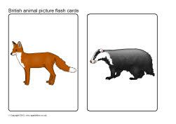 British animals picture flash cards