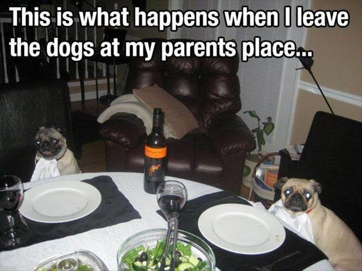 I can neither confirm nor deny that I do this with the chicklet's dogs...