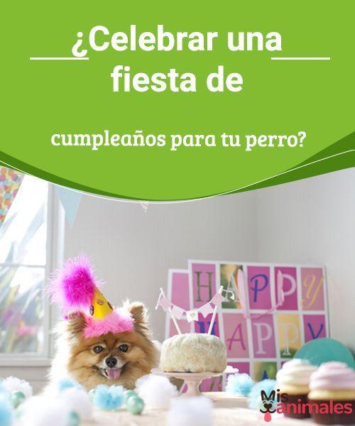 ¿Celebrar una fiesta de cumpleaños para tu perro? Si estás pensando organizar una fiesta de cumpleaños para tu mascota, en este post te contamos cuáles son los juegos perfectos para que se divierta. #cumpleaños #fiesta #mascota #consejos
