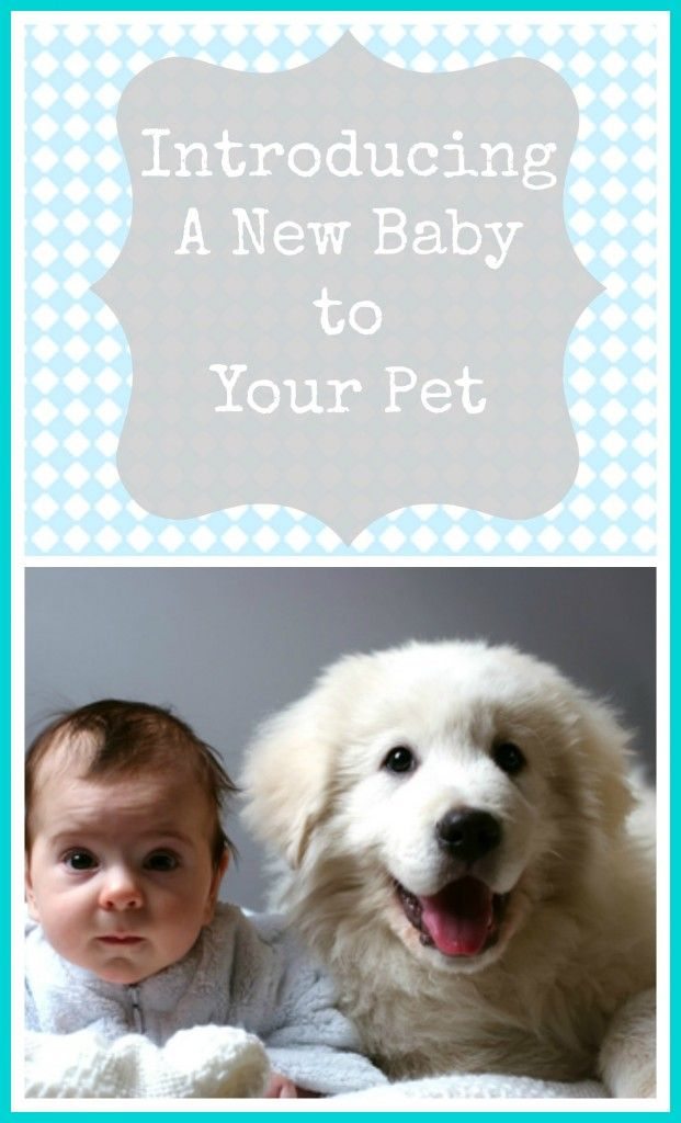 Tips for introducing your new baby to your pet