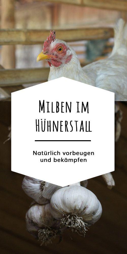 Berühmt Die Rote Vogelmilbe bei Hühnern natürlich bekämpfen | CHICKEN &FN_25