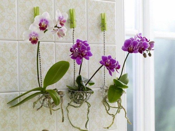 Свой сад дома: Куда поставить комнатные растения: на полу ...