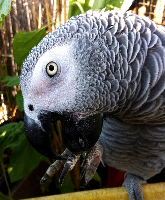 Rainysunraynails Feathered Friends Mani Pedi Bird Nail Art: 45 Best African Grey Parrot Images On Pinterest
