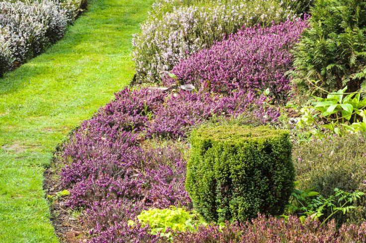 Rosiers, vivaces, geraniums vivaces, bruyères, ces quelques plantes pour bordure n'exigent pas d'entretien, ou presque.
